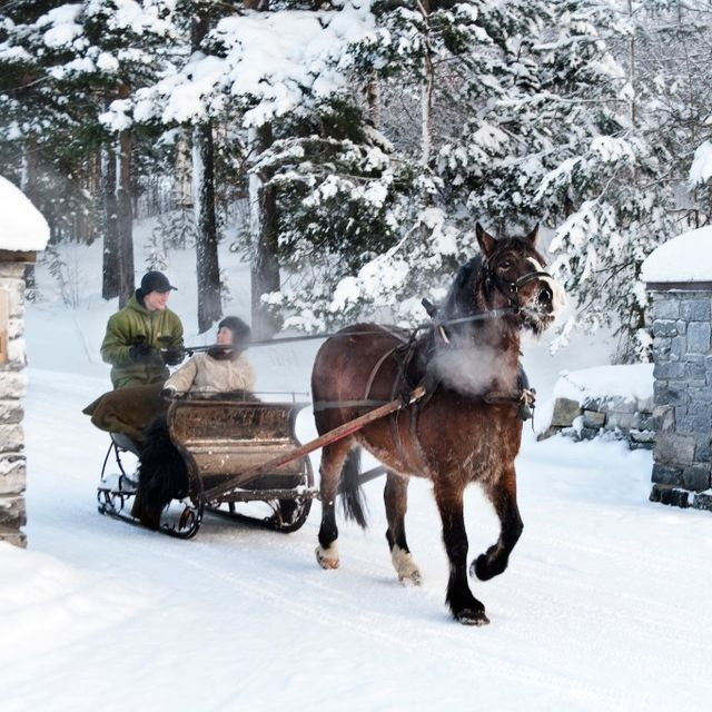 Sleigh ride with horse